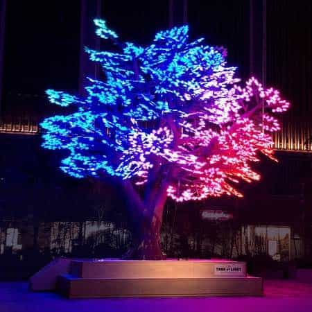 The Tree of Light Japan